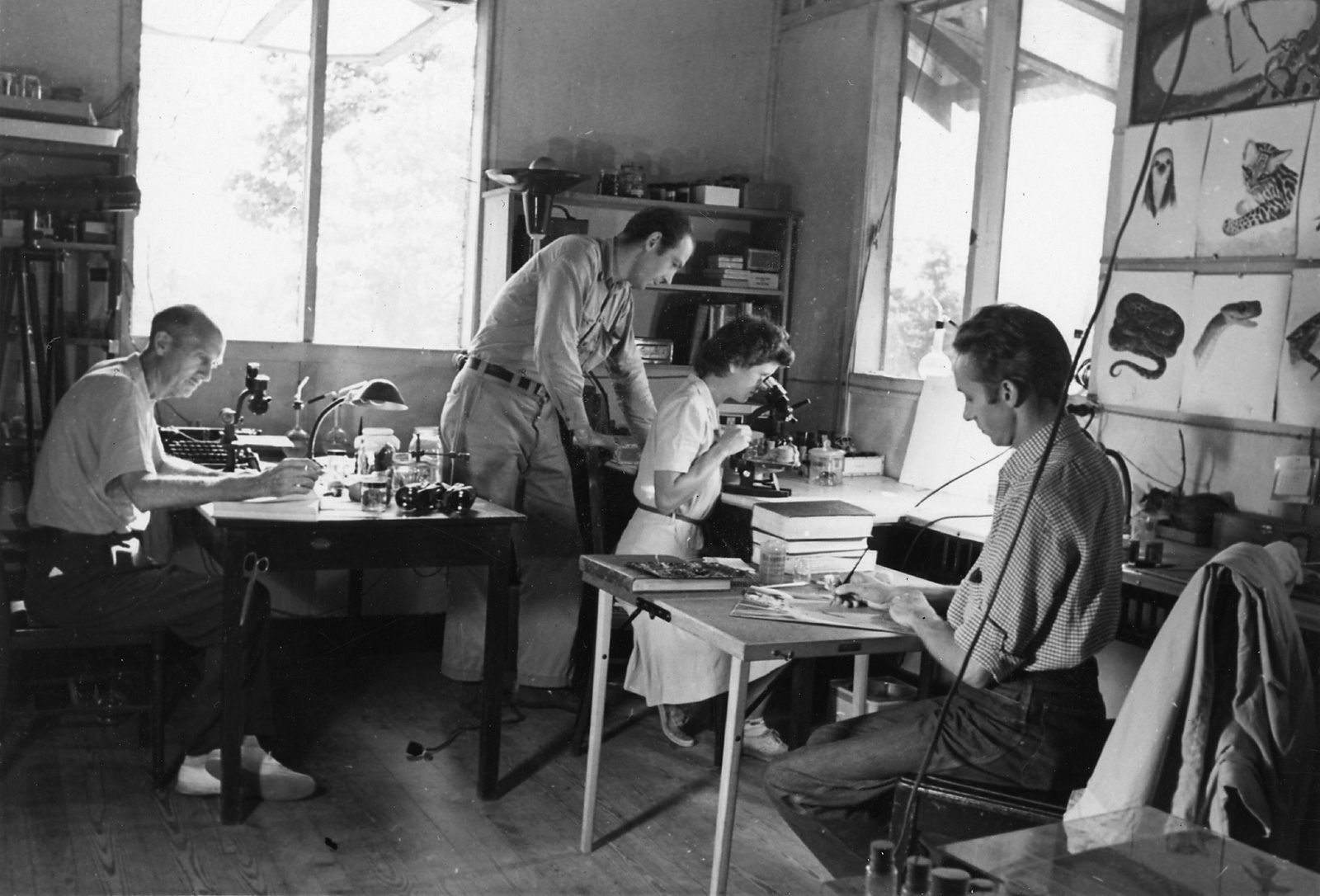 William Beebe and staff at work in lab in Venezuela, 1940s. © Wildlife Conservation Society. Reproduced by permission of the WCS Archives.