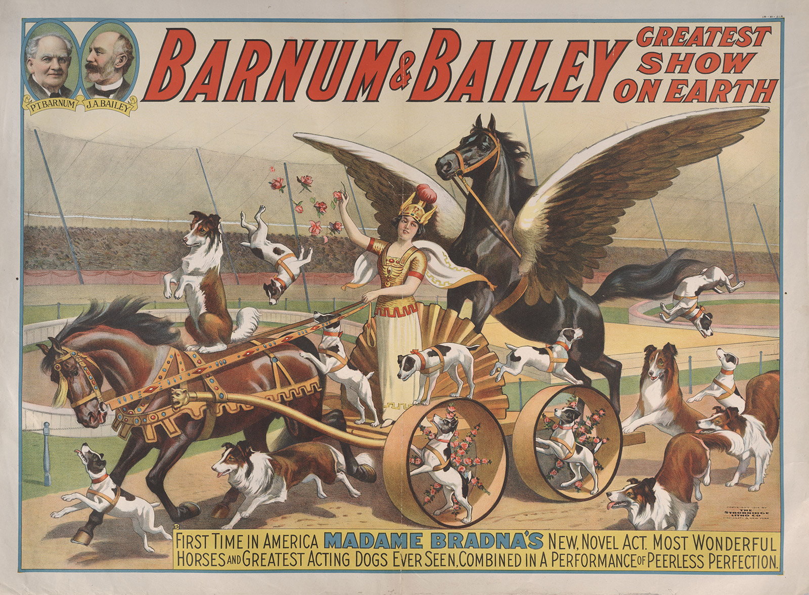 Circus poster. First Time in America MADAM BRADNA's New Novel Act…, n.d. Ringling Museum of Art, Tibbals Collection, Sarasota, Florida